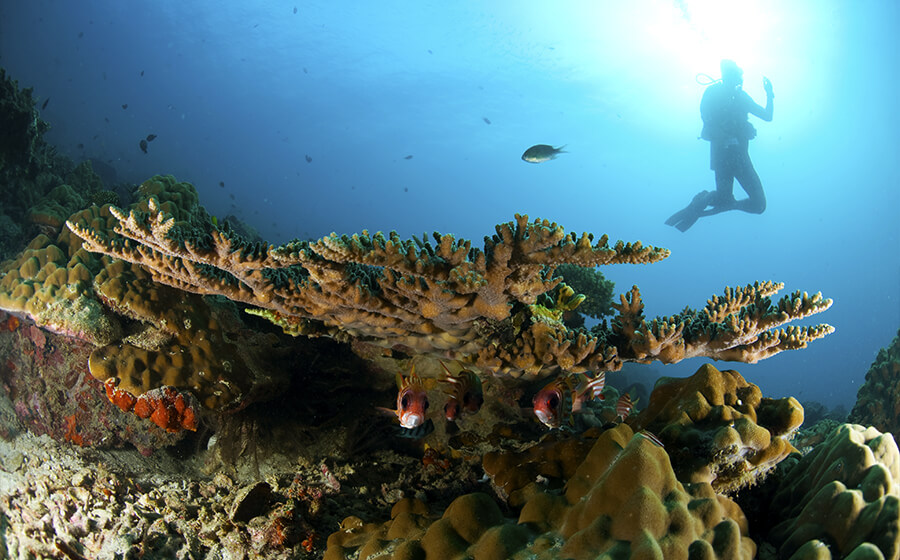 Coral Garden - Tenggol Dive Sites