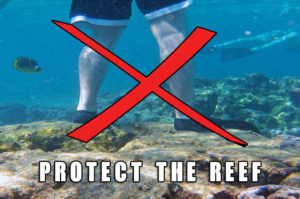 Do not stand on Coral - Protect The Reef