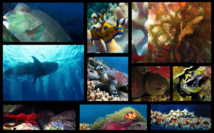 Diving Tenggol Sea life Guide - By A.Jennings