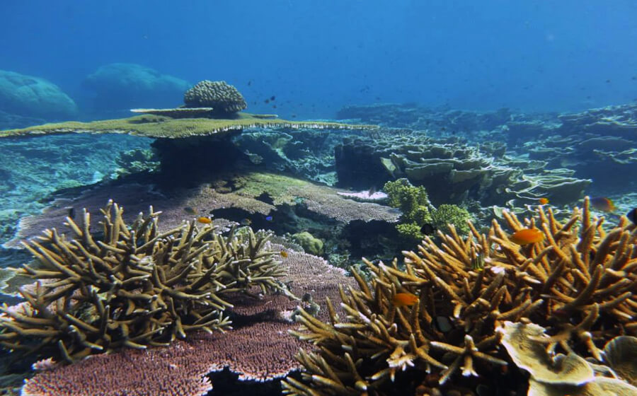 The Lost World - Tenggol Dive Sites